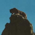 Mt. Lion